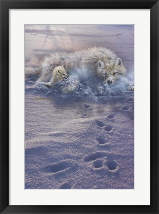 Framed Arctic Tracks Print