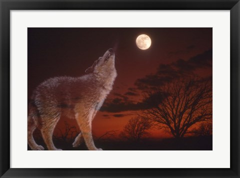 Framed White Wolf And Full Moon Print