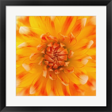 Framed Orange Glow Print