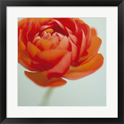 Framed Orange Delight II Print