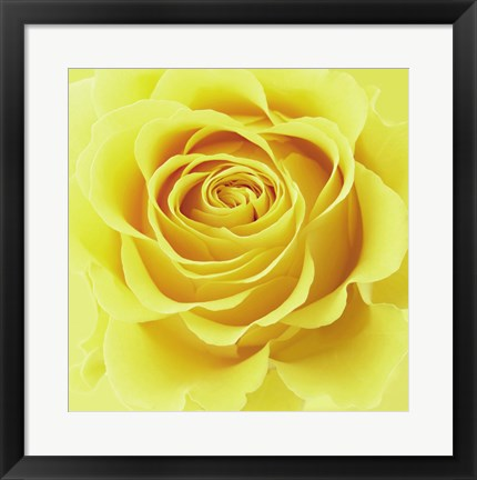 Framed Yellow Rose Print