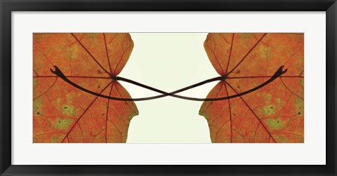 Framed Entwined Print