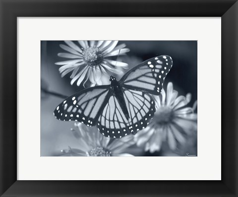 Framed Monarch On Wildflower Print