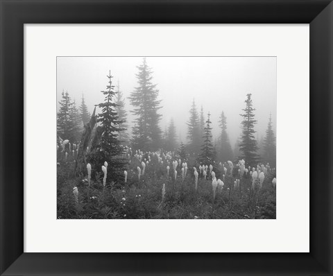 Framed Evergreens And Field Mist 7 Print