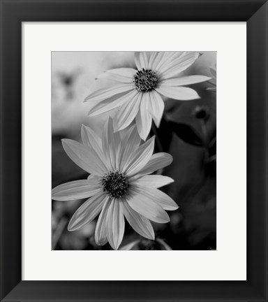Framed Wildflowers 1 Print