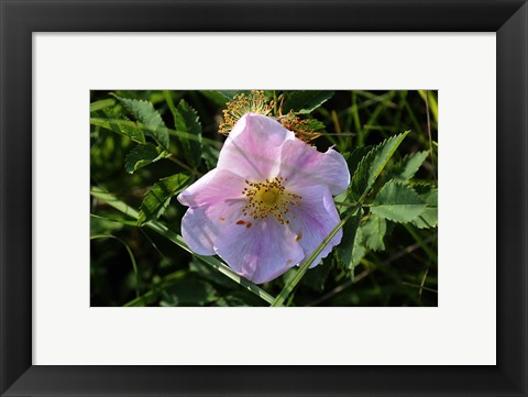 Framed Shades Of Nature Pink And White Bloom On Green Print