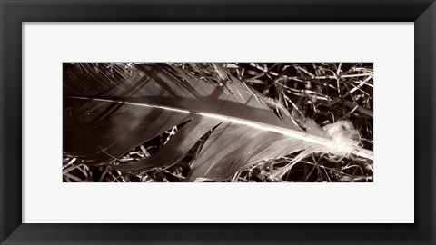 Framed Feather and Shrub Print
