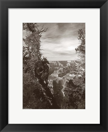 Framed Sepia Grand Canyon 2 Print