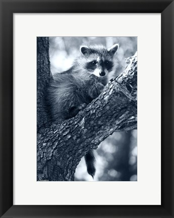 Framed Raccoon Print
