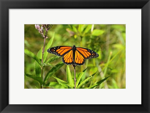 Framed Shades Of Nature Butterfly Print