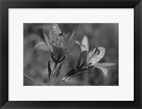 Framed Wildflowers 3 Print