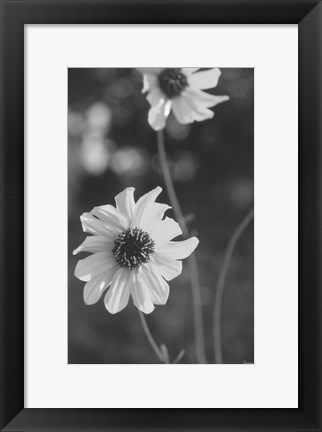 Framed Wildflowers 11 Print