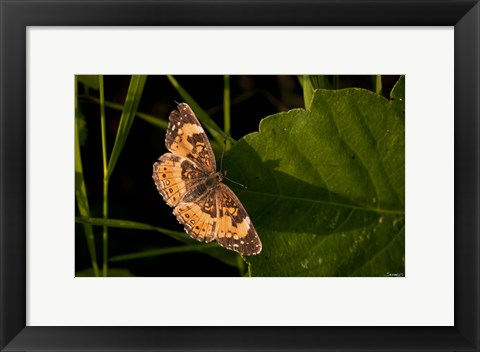 Framed Orange And Brown Butterfly On Leaf Print