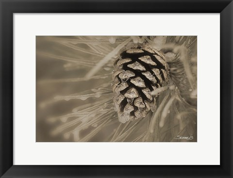 Framed Frosted Acorn And Pine Needles Print