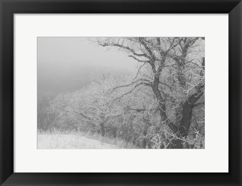 Framed Winter Snow And Trees 2 Print