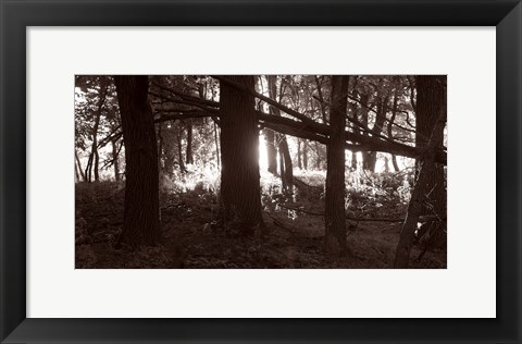 Framed Woods And Sunlight II Print