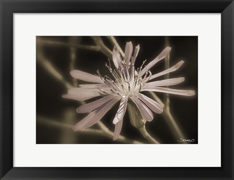 Framed Pink Flower Petal Closeup Print