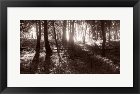 Framed Woods And Sunlight I Print