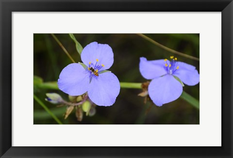 Framed Shades Of Nature Bee On Purple Flower Print