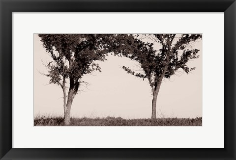 Framed Two Trees In Field Black And White Print