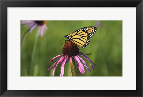 Framed Shades Of Nature Butterfly And Flower I Print