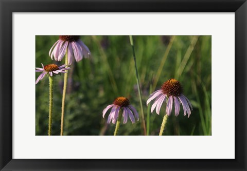 Framed Shades Of Nature Lavender And Red Blooms Print