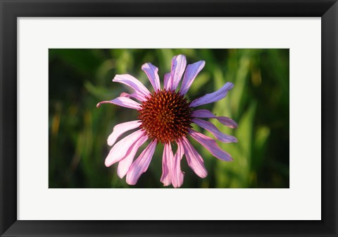 Framed Shades Of Nature Lavender And Red Bloom II Print