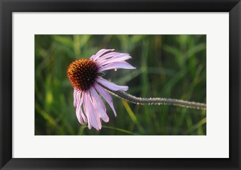 Framed Shades Of Nature Lavender And Red Bloom I Print