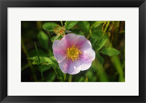 Framed Shades Of Nature White Bloom I Print
