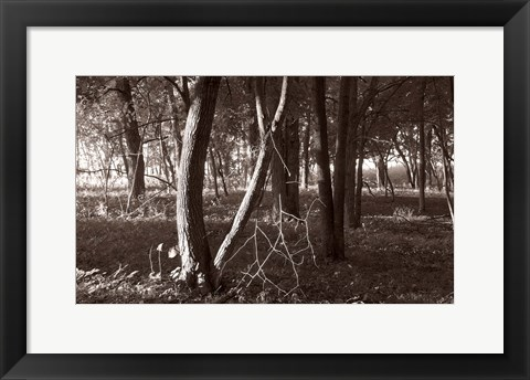 Framed Woods In Sunlight Print