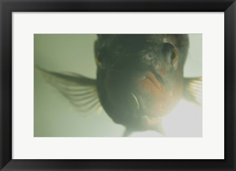 Framed Green Underwater Fish Closeup Print