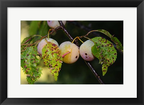 Framed Shades Of Nature Fruits And Critters Print