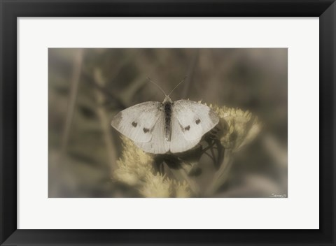 Framed White Moth On Yellow Flower Closeup Print