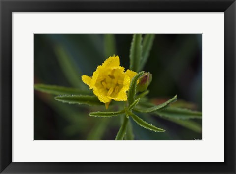Framed Yellow Wildflower And Leaves Print