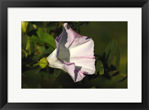 Framed Shades Of Nature Lilac Flower on Green Print