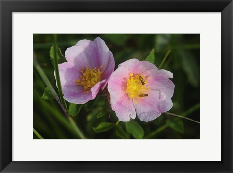 Framed Shades Of Nature Pink And White Bloom Print