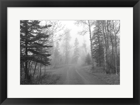 Framed Path Through Woods Black And White Print