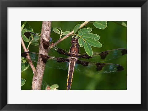Framed Dragonfly And Tiny Leaves Print