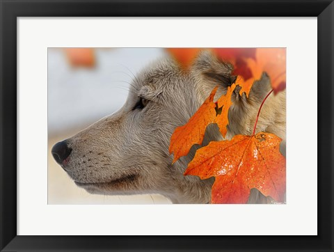 Framed Wolf Profile Autumn Leaves Print