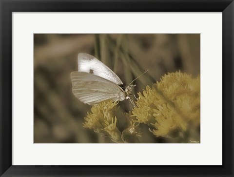 Framed Moth On Yellow Wildflower Print
