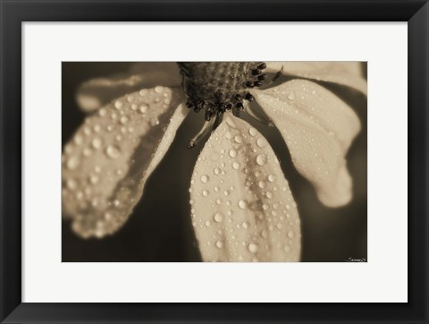 Framed Black And White Flower With Dew Print