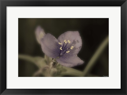 Framed Purple And White Flower Closeup Print