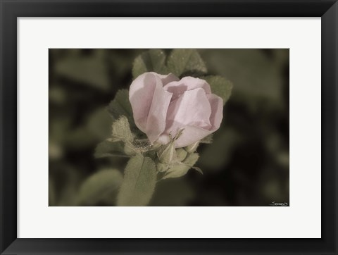 Framed Pink Flower Closeup I Print