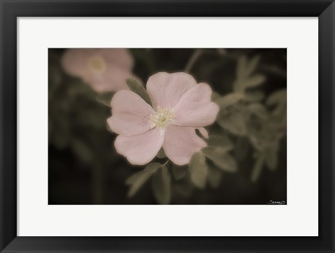 Framed Pink Flower Garden Closeup Print