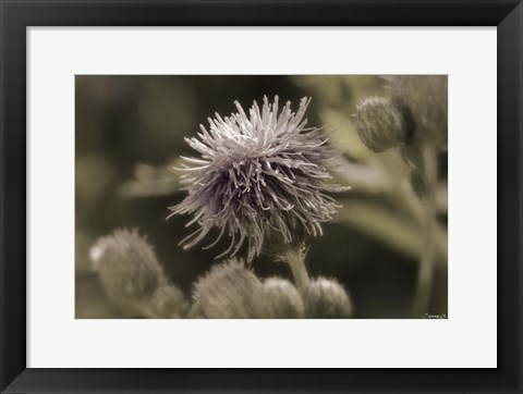 Framed Purple Bloom And Green Flower Buds Print