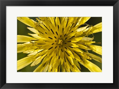 Framed Yellow Flower Petals Closeup Print