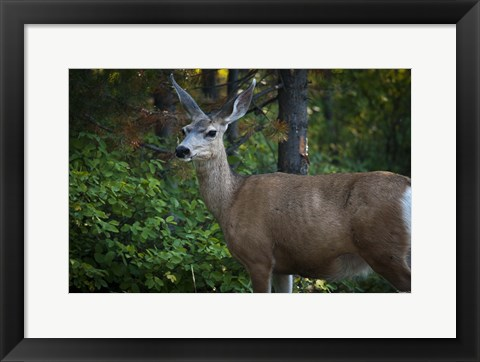 Framed Wildlife In Teton Print
