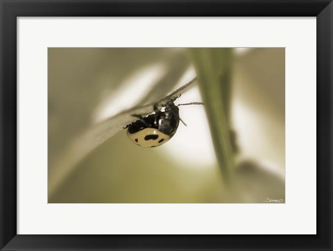 Framed Yellow Ladybug On Blade Of Grass Print