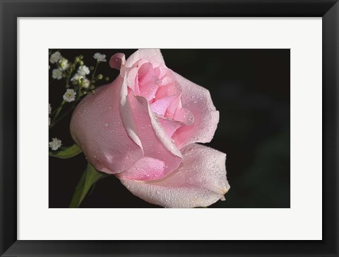 Framed Rose Pink Print
