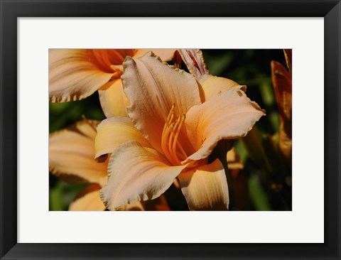 Framed Shades Of Nature Orange Flowers Print